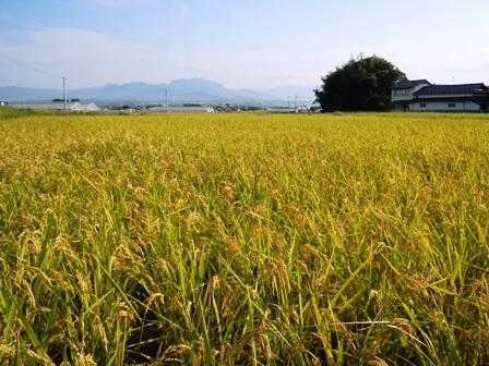 サンクスアイ農場(2).JPG