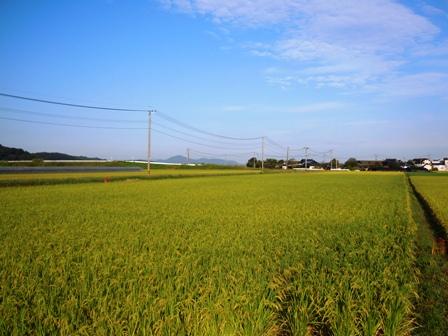 サンクスアイ農場(5).JPG