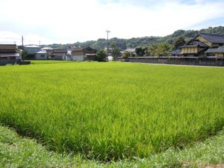 サンクスアイ農場1-1(8.30).JPG