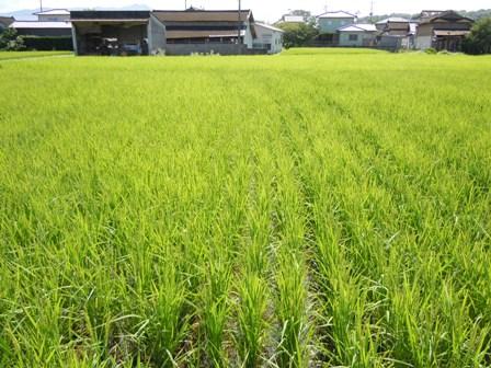 サンクスアイ農場1-2(8.30).JPG