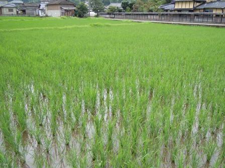 サンクスアイ農場1-5.JPG