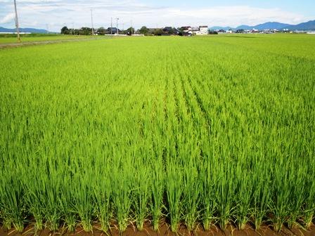 サンクスアイ農場2-1(8.30).JPG
