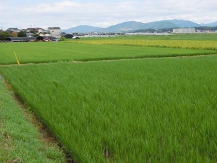 サンクスアイ農場2-1.JPG