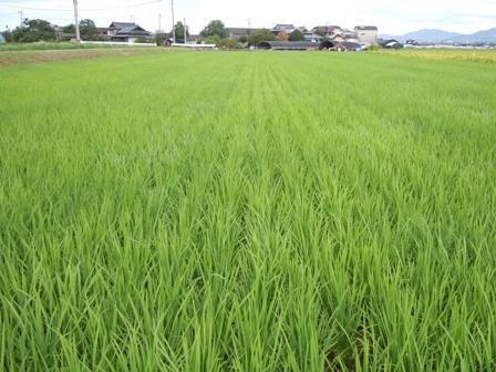 サンクスアイ農場2-2.JPG
