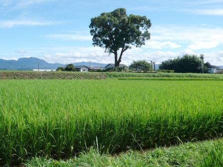 サンクスアイ農場3-1(8.30).JPG