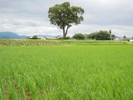 サンクスアイ農場3-1.JPG