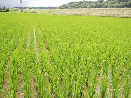 サンクスアイ農場3-3.JPG