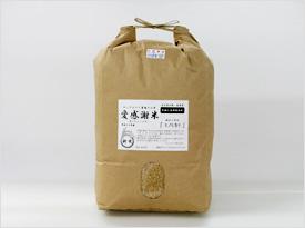 ヒノヒカリ(2011.3.15).jpg