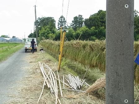 稲刈り10.JPG