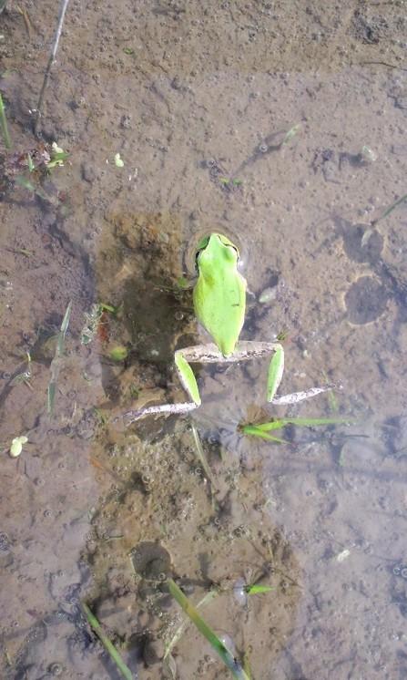 雨蛙休憩.jpg
